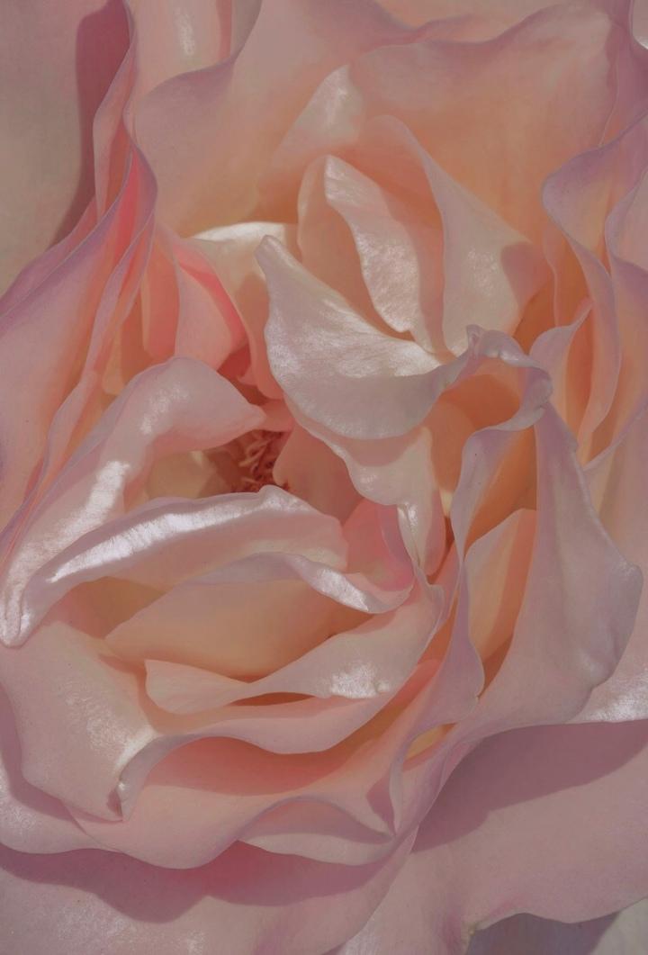 Bloom Visual